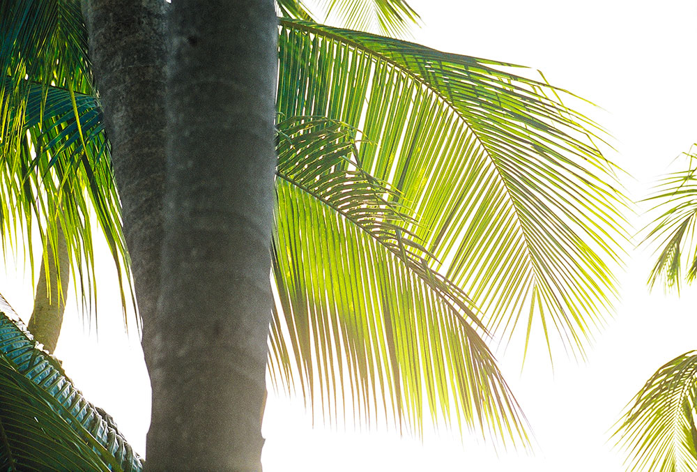 barbados-palms.jpg