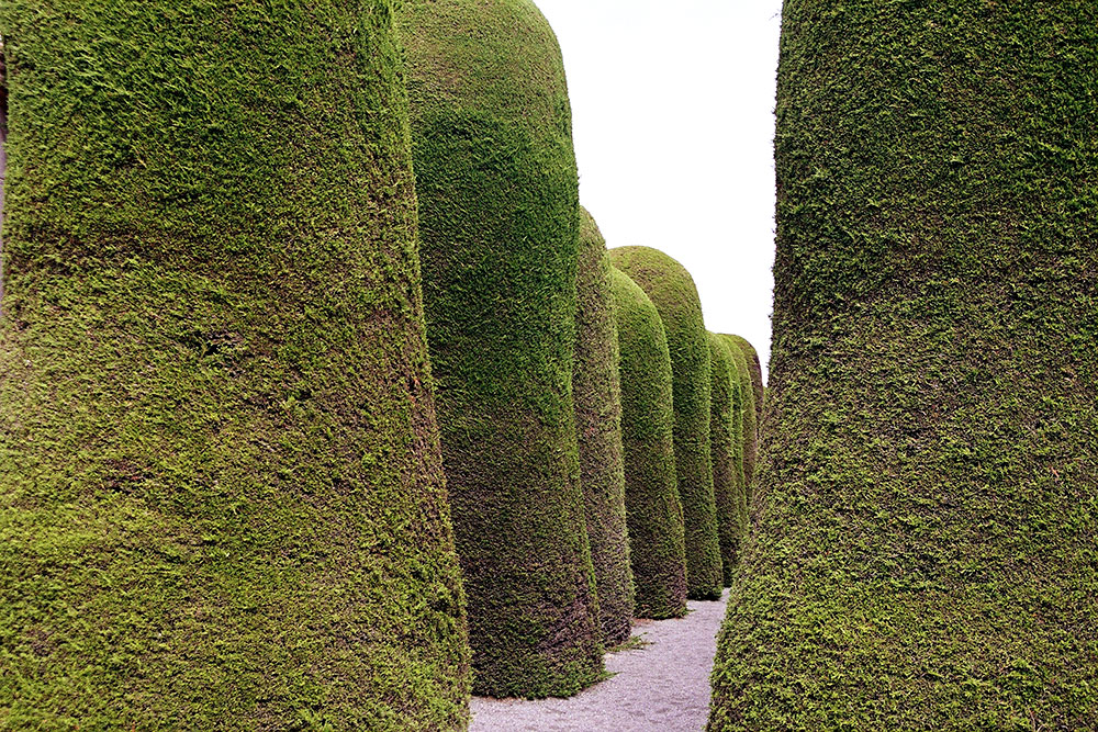 cemetary-trees.jpg