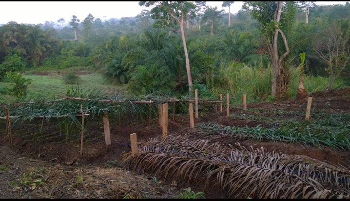 24. Early stages of farm - Feb 2016.png