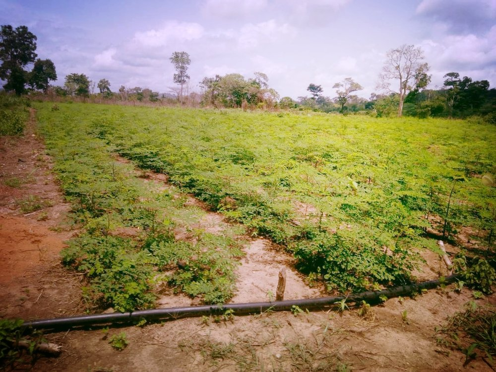 Irrigated farm 1.jpg