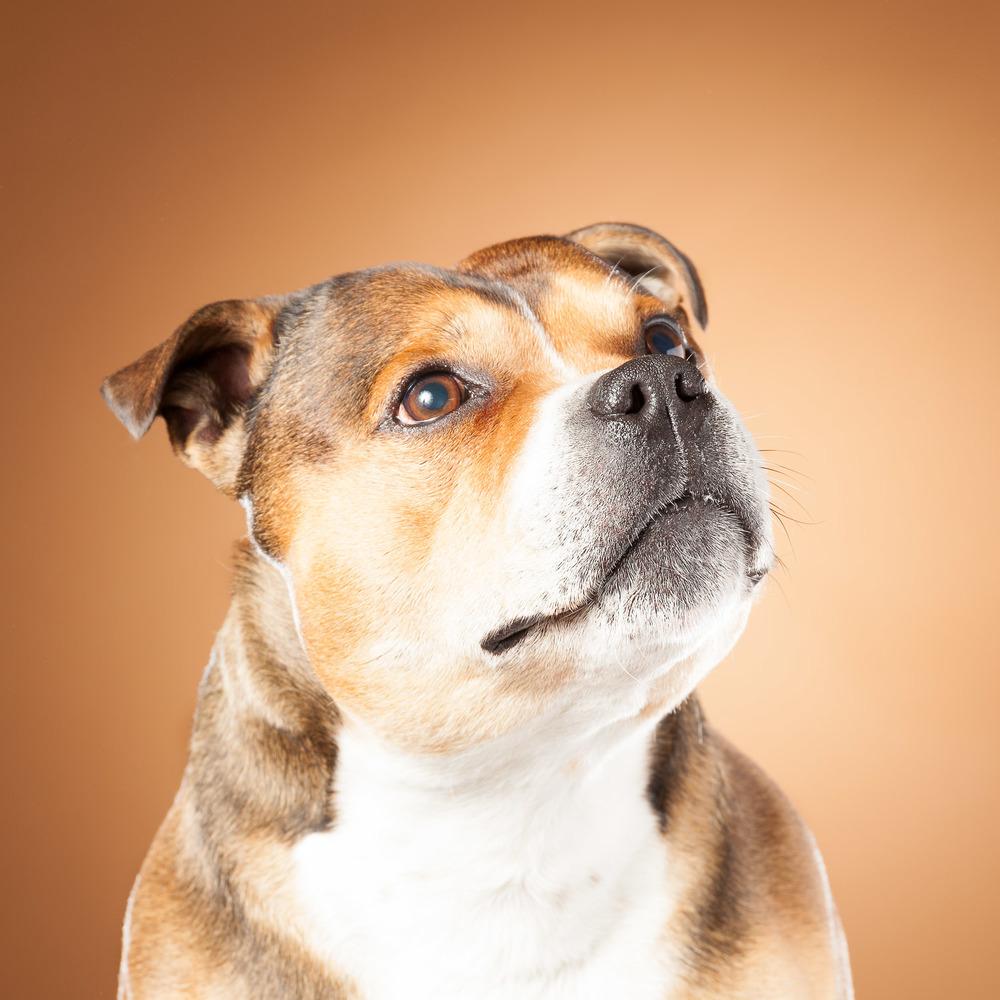 hund-hundefotograf-hundefotografering-fotograf-hodnedesign-pål-hodne--40.jpg