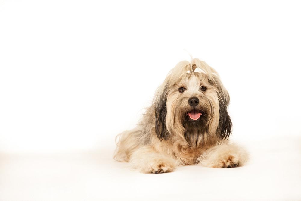 hund-hundefotograf-hundefotografering-fotograf-hodnedesign-pål-hodne--39.jpg