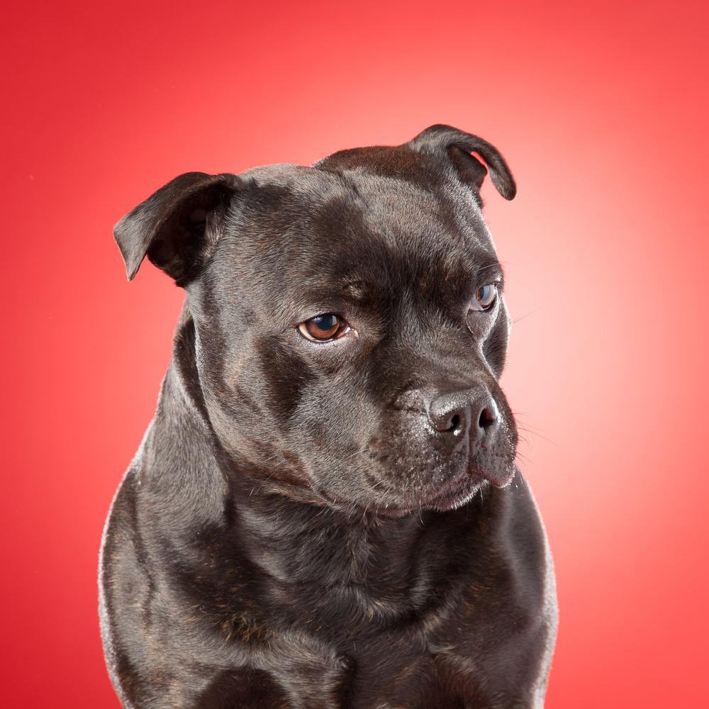 hund-hundefotograf-hundefotografering-fotograf-hodnedesign-pål-hodne--37.jpg