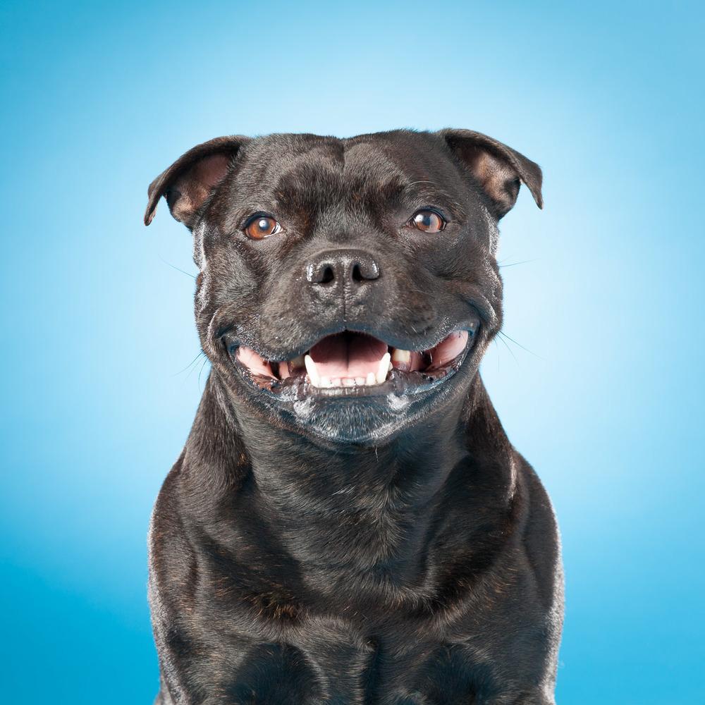 hund-hundefotograf-hundefotografering-fotograf-hodnedesign-pål-hodne--38.jpg