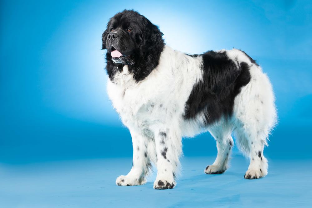 hund-hundefotograf-hundefotografering-fotograf-hodnedesign-pål-hodne--34.jpg