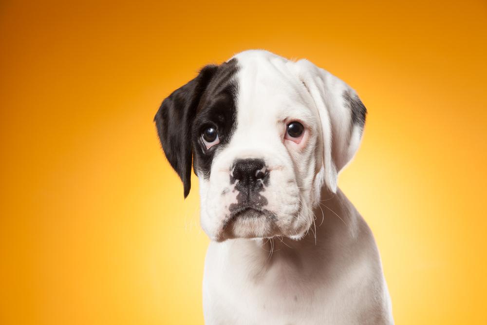 hund-hundefotograf-hundefotografering-fotograf-hodnedesign-pål-hodne--32.jpg