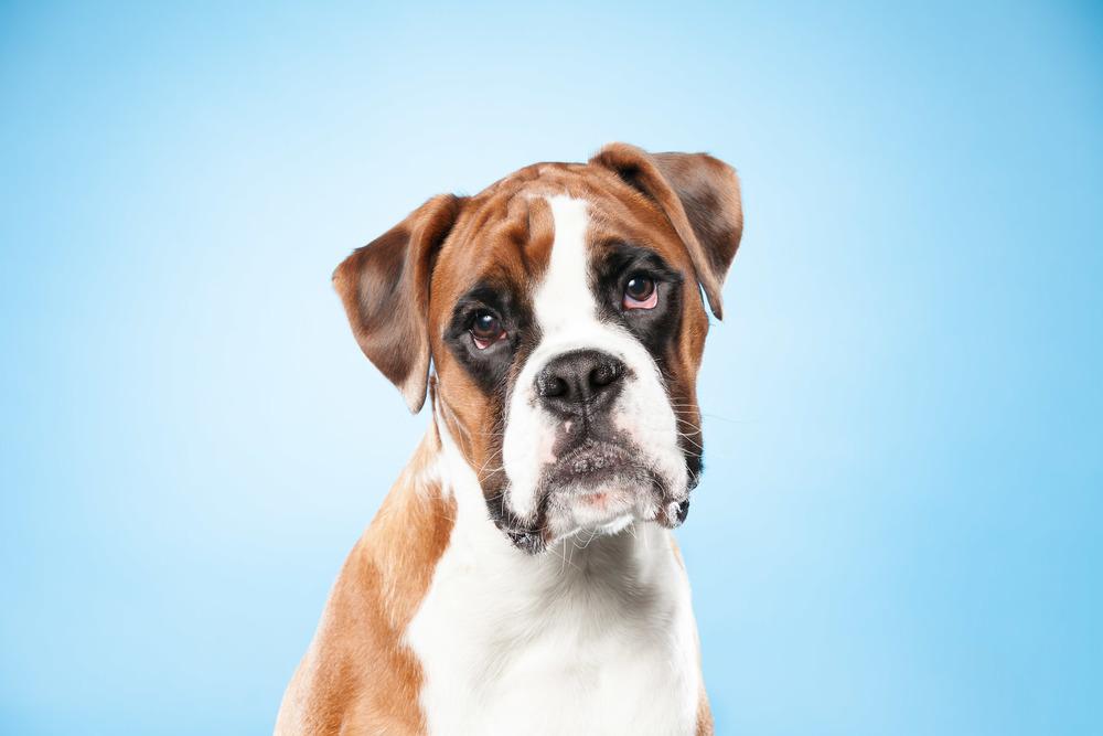 hund-hundefotograf-hundefotografering-fotograf-hodnedesign-pål-hodne--31.jpg