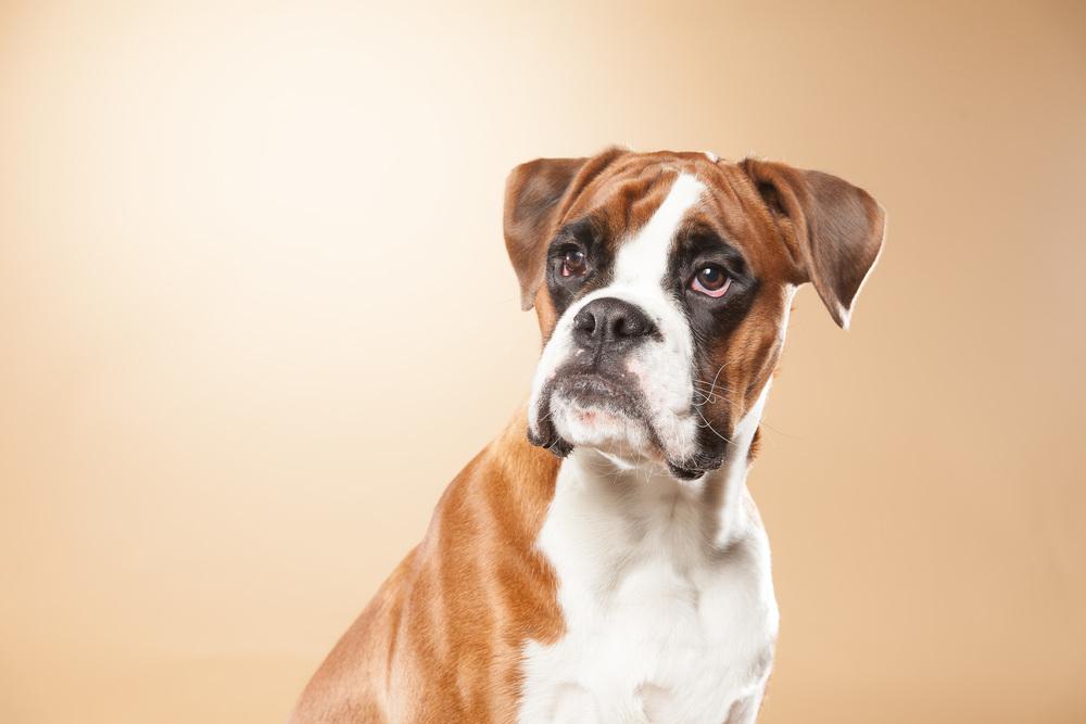 hund-hundefotograf-hundefotografering-fotograf-hodnedesign-pål-hodne--30.jpg