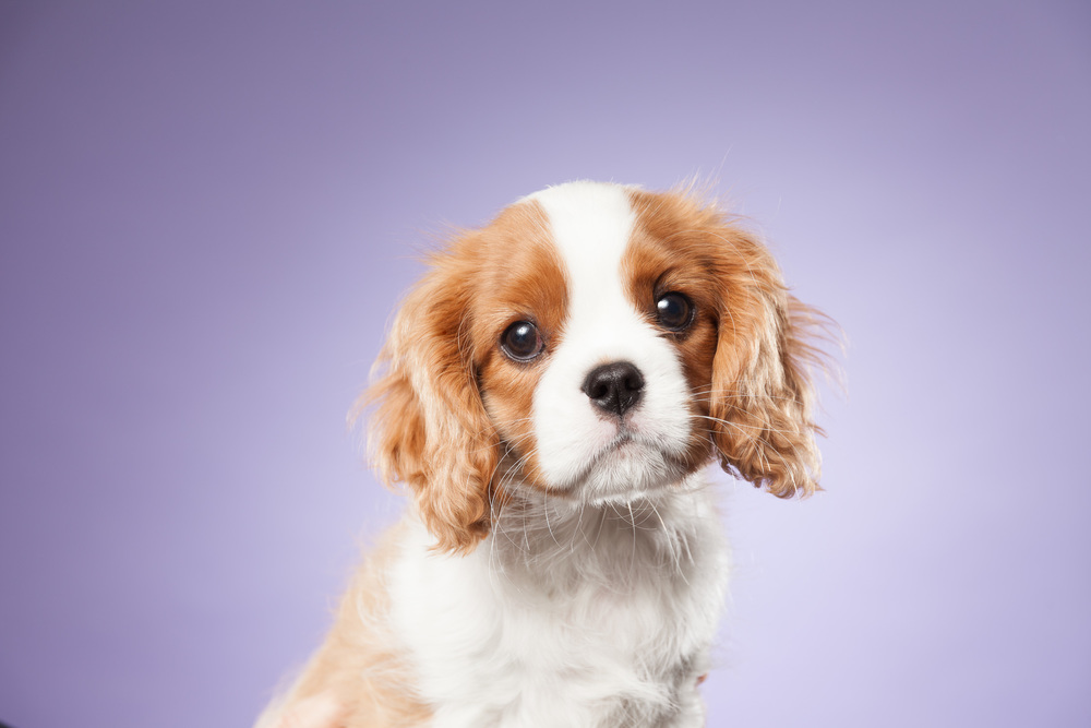 hund-hundefotograf-hundefotografering-fotograf-hodnedesign-pål-hodne--29.jpg