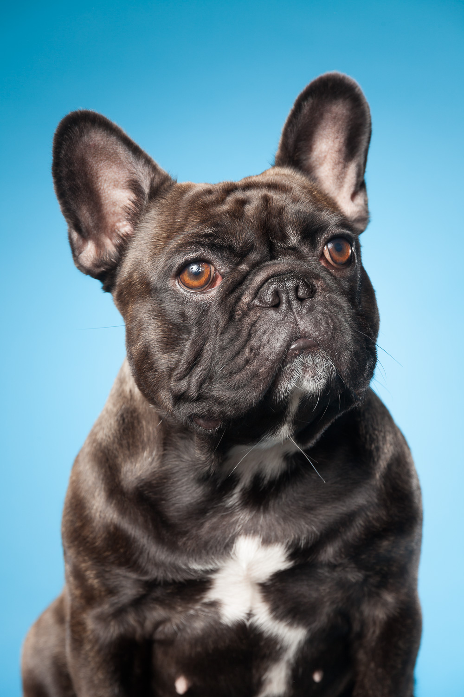 hund-hundefotograf-hundefotografering-fotograf-hodnedesign-pål-hodne--28.jpg