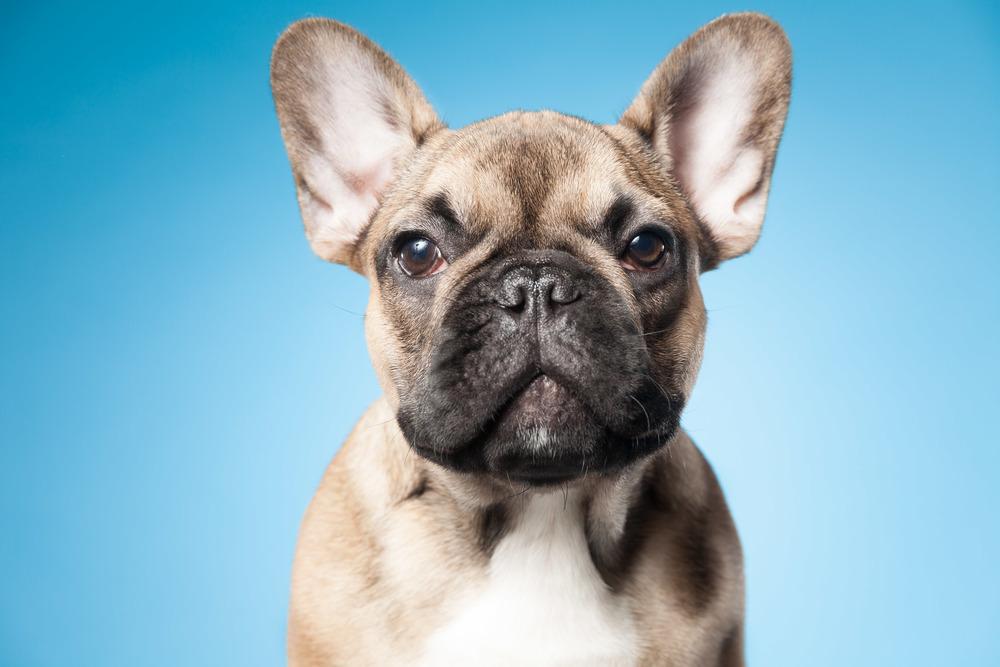 hund-hundefotograf-hundefotografering-fotograf-hodnedesign-pål-hodne--27.jpg