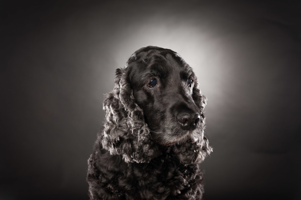 hund-hundefotograf-hundefotografering-fotograf-hodnedesign-pål-hodne--22.jpg