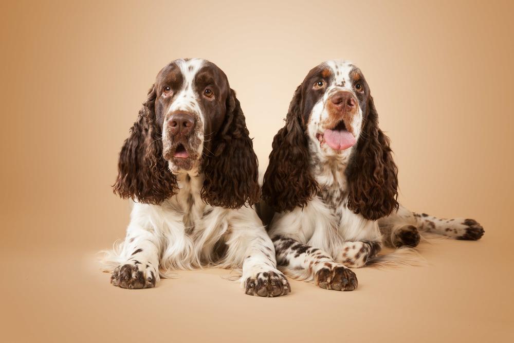 hund-hundefotograf-hundefotografering-fotograf-hodnedesign-pål-hodne--20.jpg