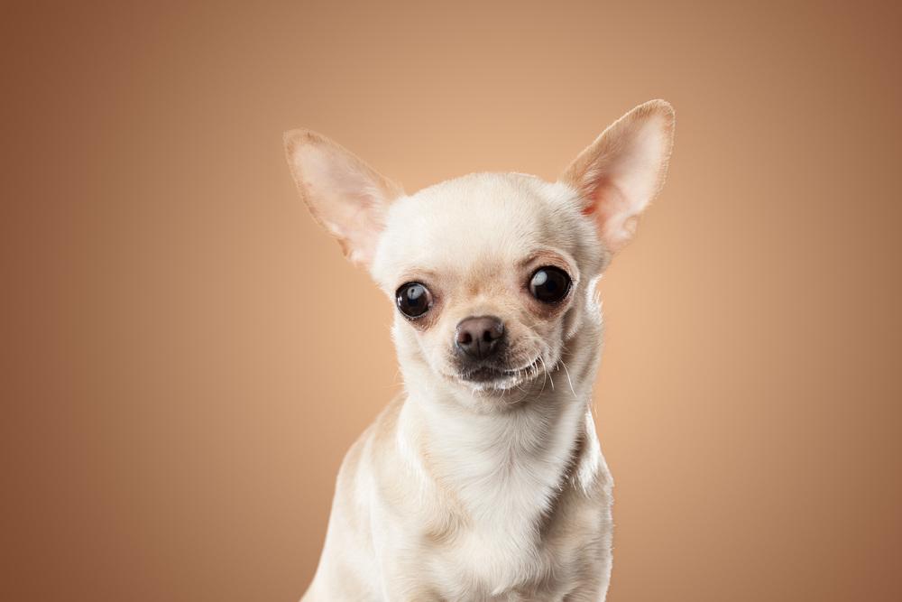 hund-hundefotograf-hundefotografering-fotograf-hodnedesign-pål-hodne-2-2.jpg