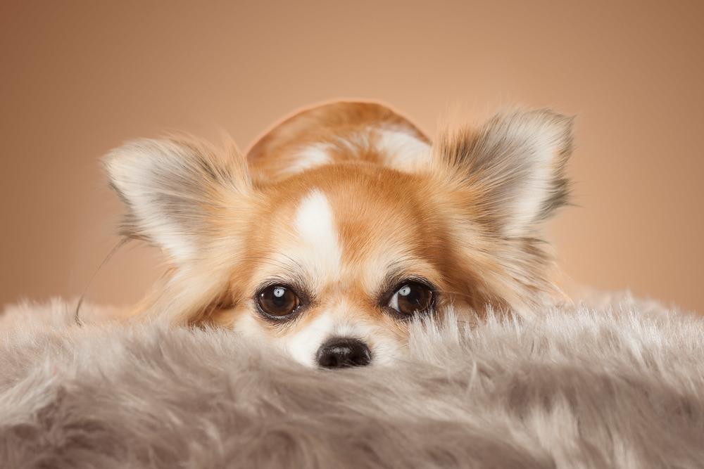 hund-hundefotograf-hundefotografering-fotograf-hodnedesign-pål-hodne--19.jpg