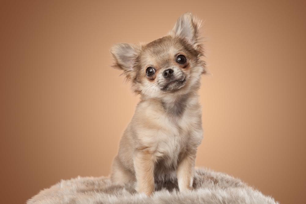 hund-hundefotograf-hundefotografering-fotograf-hodnedesign-pål-hodne--18.jpg