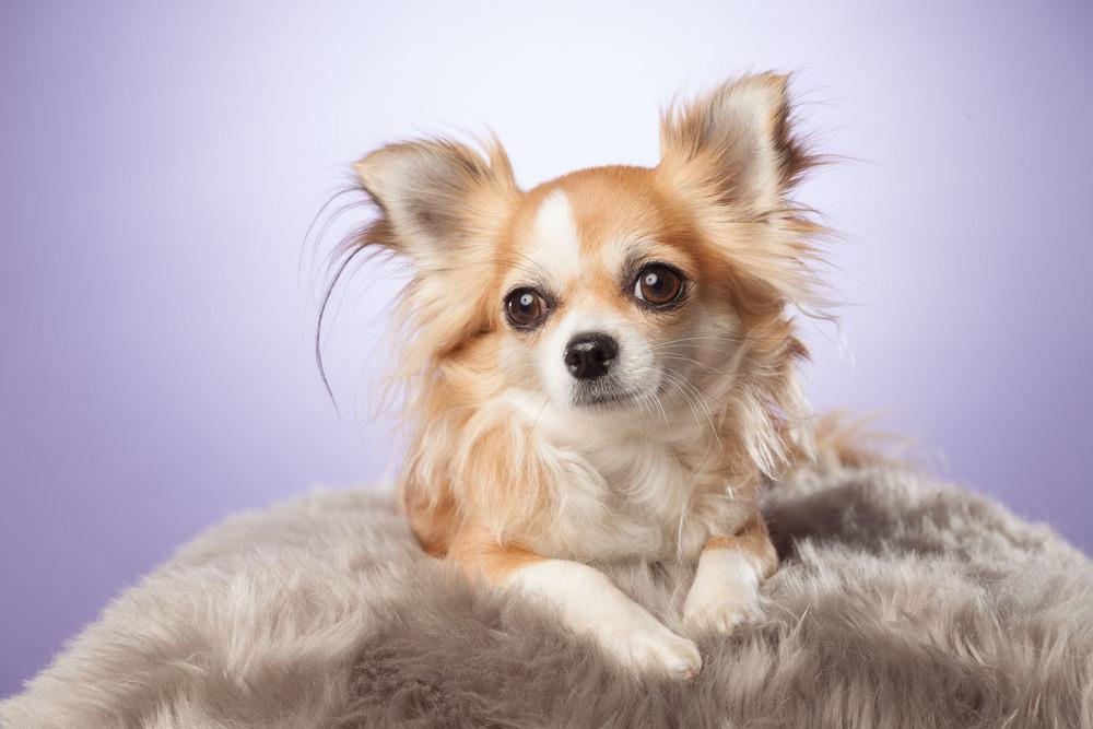 hund-hundefotograf-hundefotografering-fotograf-hodnedesign-pål-hodne--17.jpg