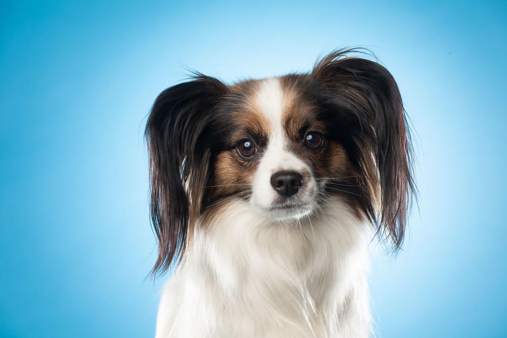 hund-hundefotograf-hundefotografering-fotograf-hodnedesign-pål-hodne--16.jpg