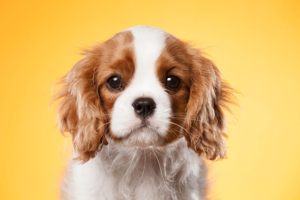 hund-hundefotograf-hundefotografering-fotograf-hodnedesign-pål-hodne--15.jpg