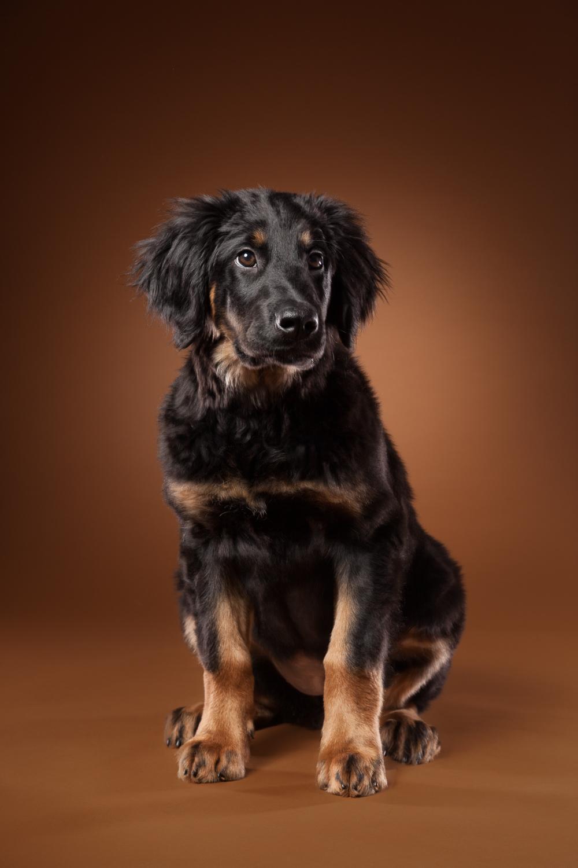 hund-hundefotograf-hundefotografering-fotograf-hodnedesign-pål-hodne--14.jpg