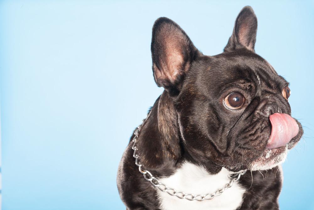 hund-hundefotograf-hundefotografering-fotograf-hodnedesign-pål-hodne-9551.jpg