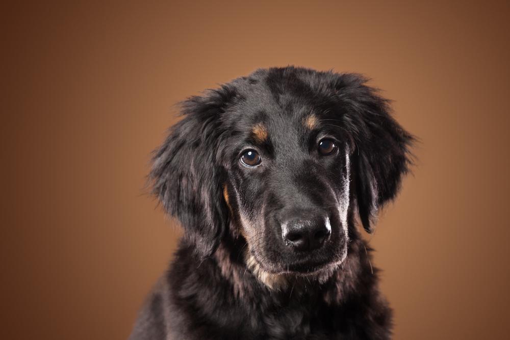 hund-hundefotograf-hundefotografering-fotograf-hodnedesign-pål-hodne--13.jpg