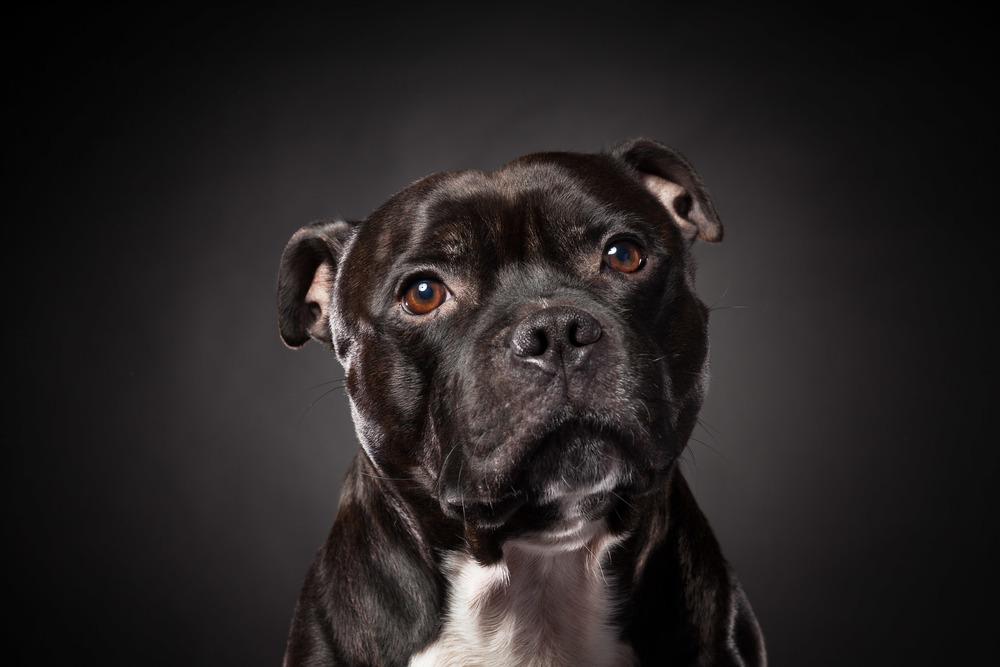 hund-hundefotograf-hundefotografering-fotograf-hodnedesign-pål-hodne--12.jpg