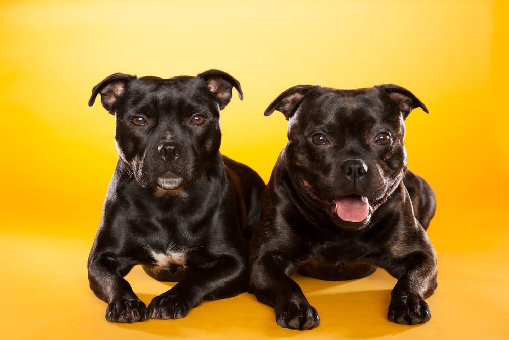 hund-hundefotograf-hundefotografering-fotograf-hodnedesign-pål-hodne--11.jpg