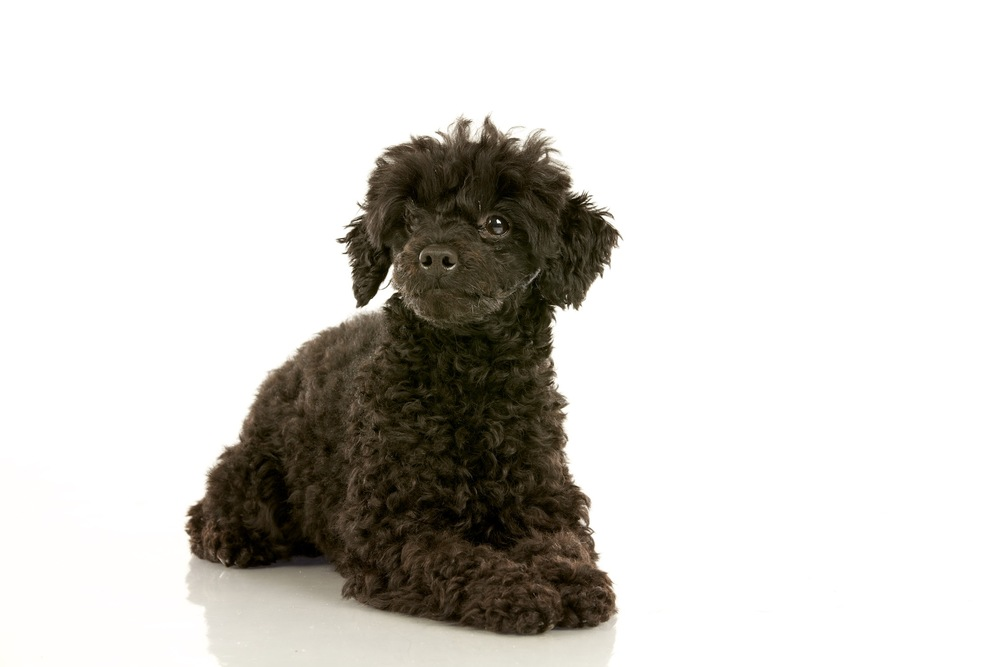 hund-hundefotograf-hundefotografering-fotograf-hodnedesign-pål-hodne  3.jpg