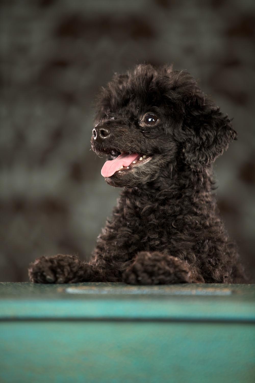 hund-hundefotograf-hundefotografering-fotograf-hodnedesign-pål-hodne  2.jpg