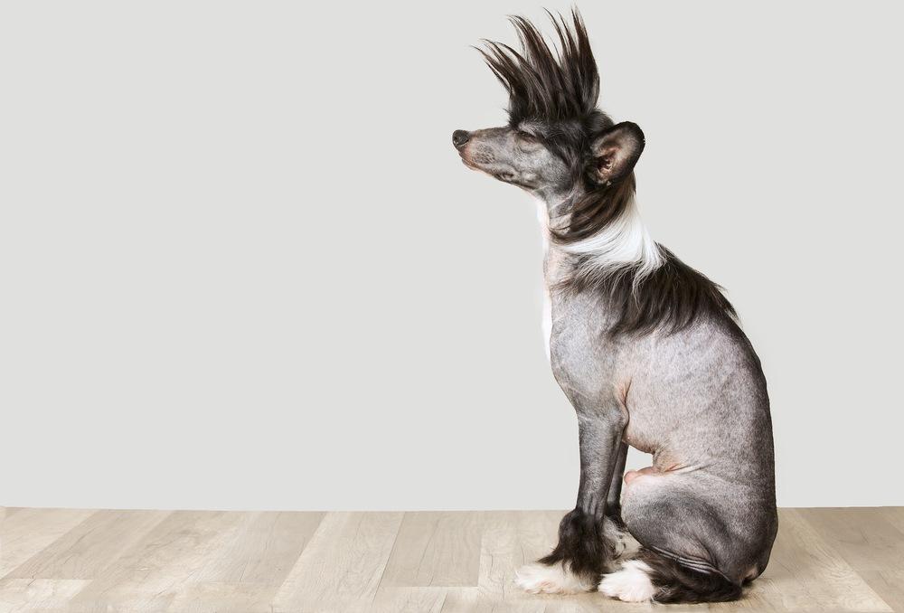 hund-hundefotograf-hundefotografering-fotograf-hodnedesign-pål-hodne (1).jpg