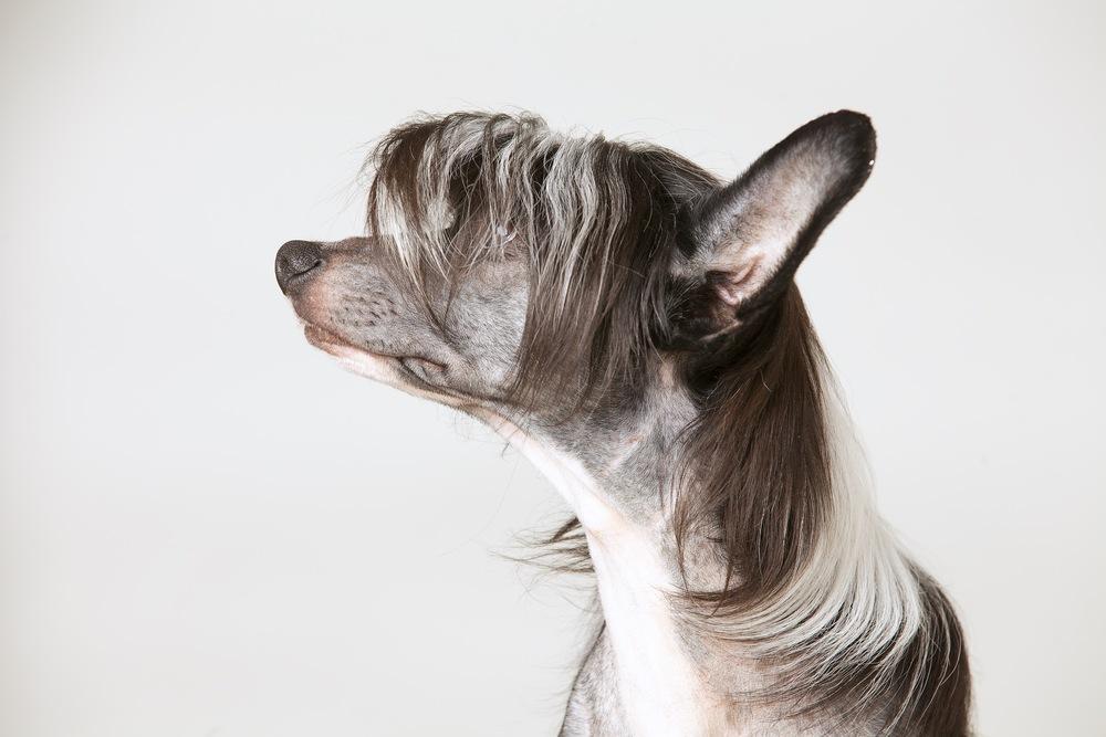 hund-hundefotograf-hundefotografering-fotograf-hodnedesign-pål-hodne.jpg