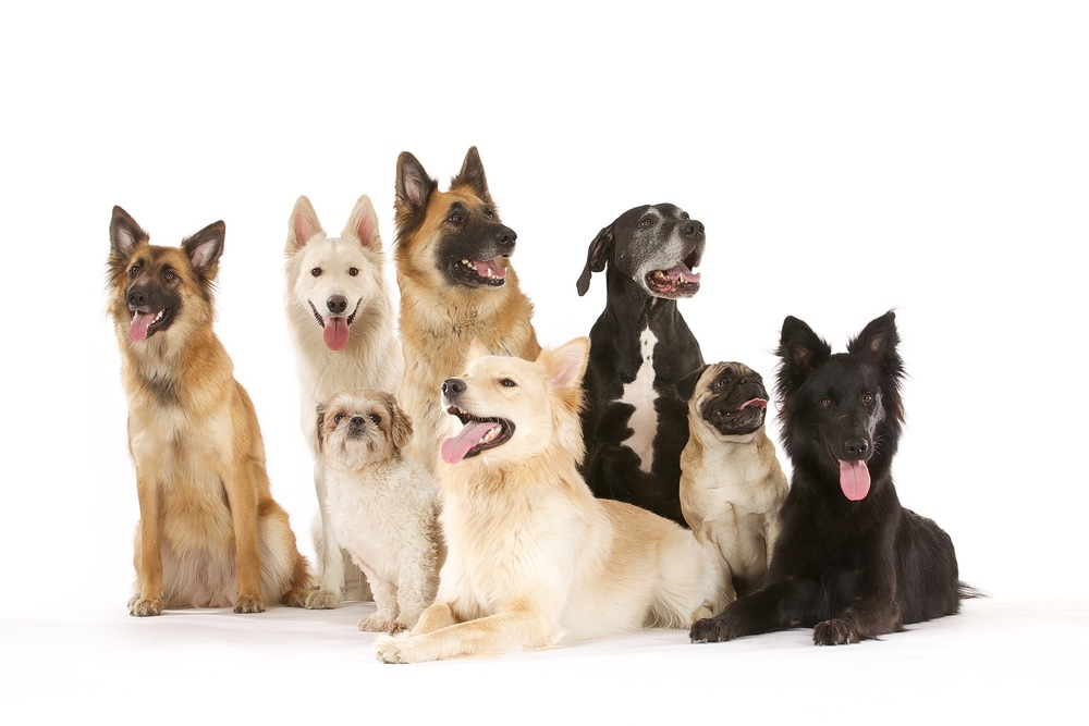 hund-hundefotograf-hundefotografering-fotograf-hodnedesign-pål-hodne 1.jpg