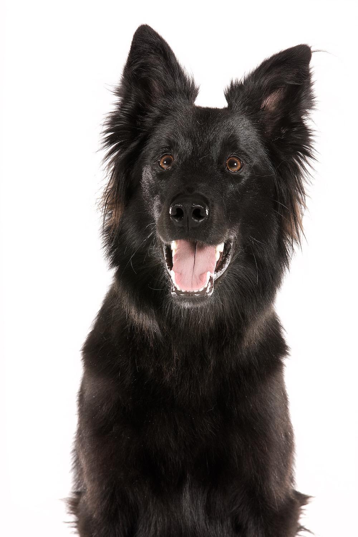 hund-hundefotograf-hundefotografering-fotograf-hodnedesign-pål-hodne 4.jpg