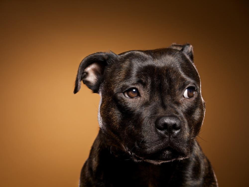 hund-hundefotograf-hundefotografering-fotograf-hodnedesign-pål-hodne 1 (1).jpg