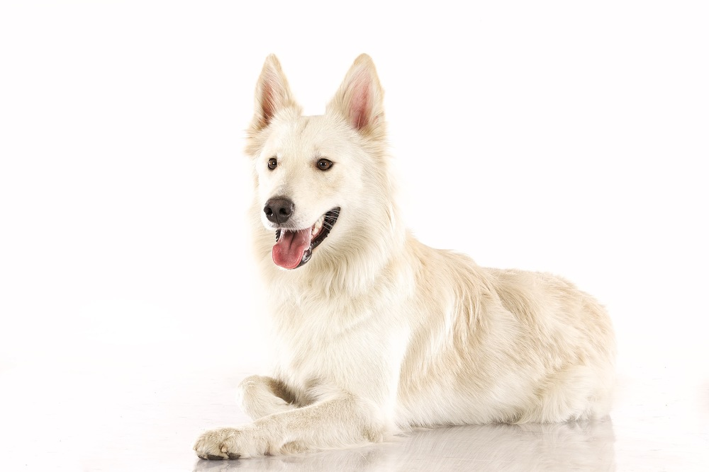 hund-hundefotograf-hundefotografering-fotograf-hodnedesign-pål-hodne 5.jpg