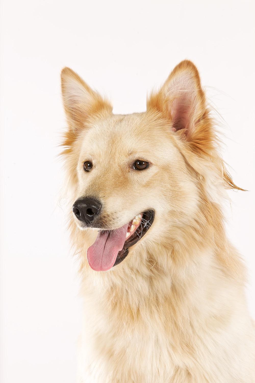 hund-hundefotograf-hundefotografering-fotograf-hodnedesign-pål-hodne 6.jpg