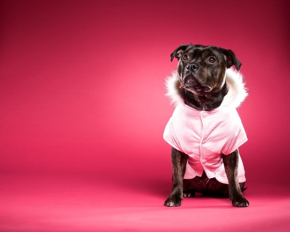 hund-hundefotograf-hundefotografering-fotograf-hodnedesign-pål-hodne (2).jpg