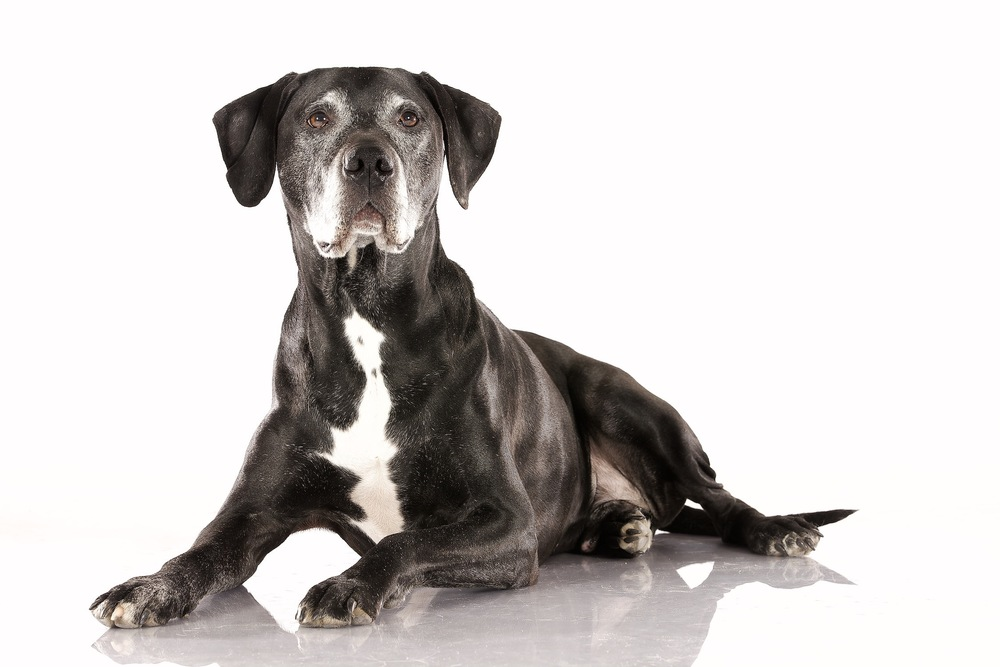 hund-hundefotograf-hundefotografering-fotograf-hodnedesign-pål-hodne 7.jpg