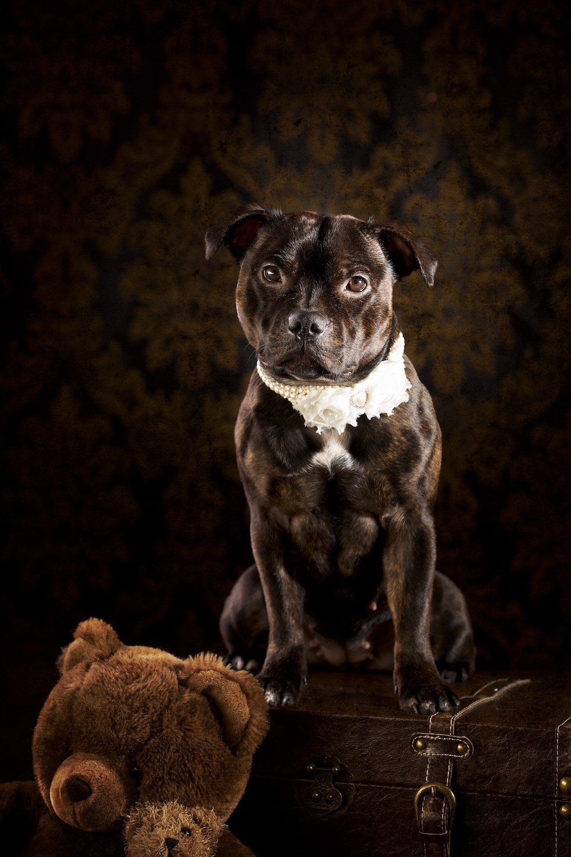 hund-hundefotograf-hundefotografering-fotograf-hodnedesign-pål-hodne (4).jpg
