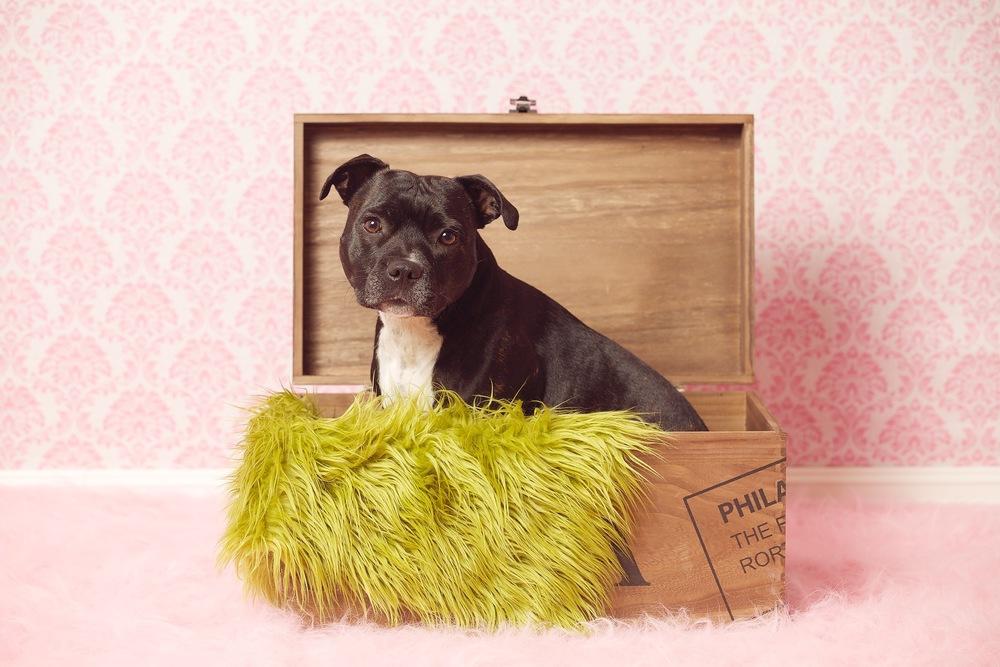 hund-hundefotograf-hundefotografering-fotograf-hodnedesign-pål-hodne 1 (2).jpg