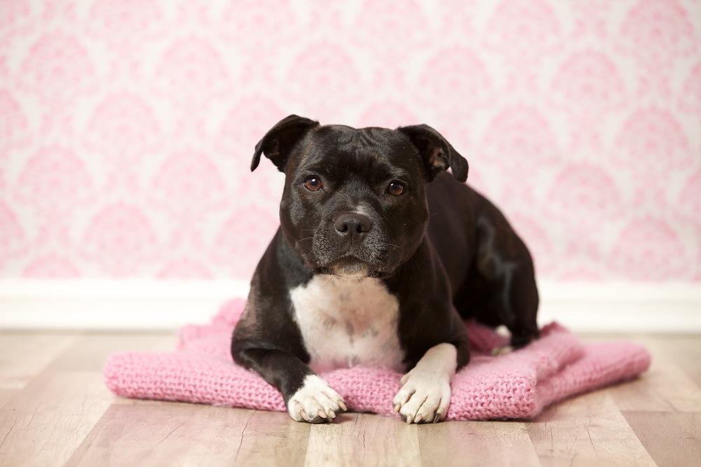 hund-hundefotograf-hundefotografering-fotograf-hodnedesign-pål-hodne 2 (2).jpg