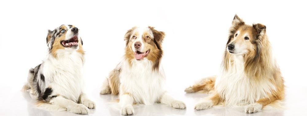 hund-hundefotograf-hundefotografering-fotograf-hodnedesign-pål-hodne (6).jpg