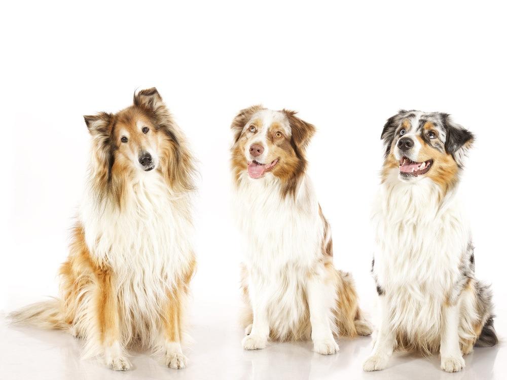 hund-hundefotograf-hundefotografering-fotograf-hodnedesign-pål-hodne (7).jpg