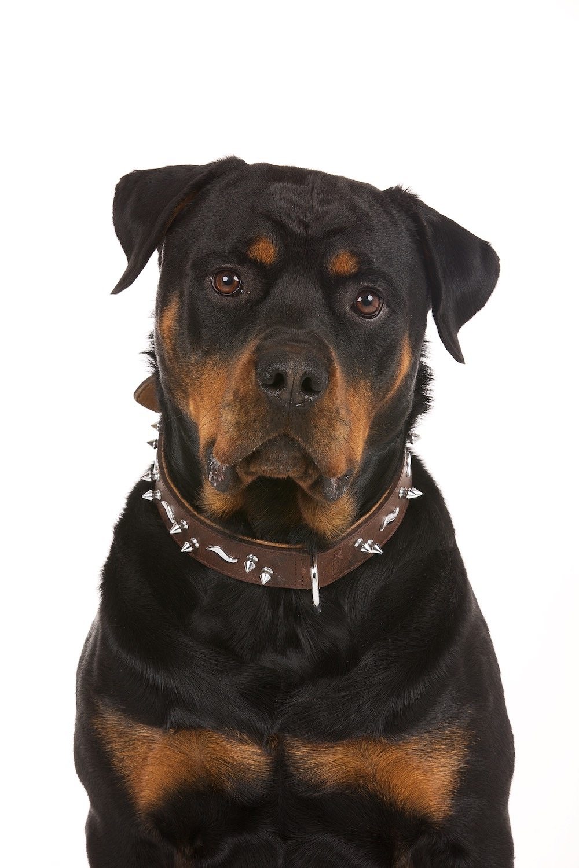 hund-hundefotograf-hundefotografering-fotograf-hodnedesign-pål-hodne (10).jpg