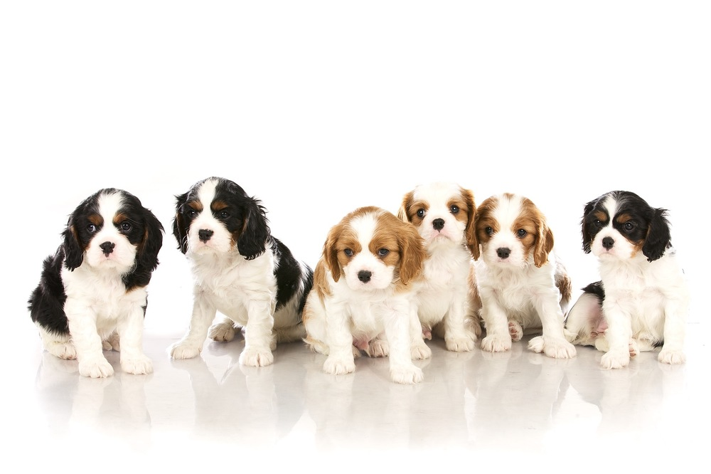 hund-hundefotograf-hundefotografering-fotograf-hodnedesign-pål-hodne 1 (5).jpg