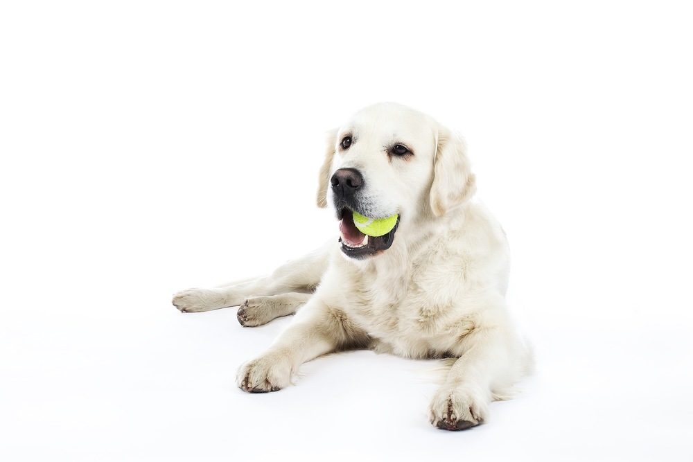 hund-hundefotograf-hundefotografering-fotograf-hodnedesign-pål-hodne 2 (4).jpg