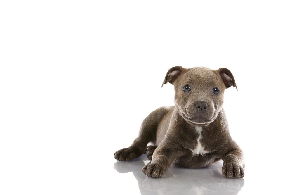 hund-hundefotograf-hundefotografering-fotograf-hodnedesign-pål-hodne 1 (6).jpg