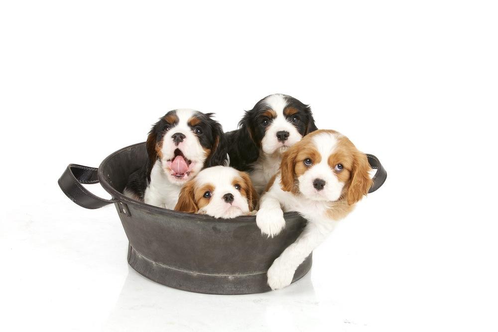hund-hundefotograf-hundefotografering-fotograf-hodnedesign-pål-hodne 2 (5).jpg