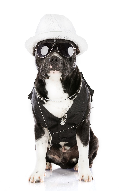 hund-hundefotograf-hundefotografering-fotograf-hodnedesign-pål-hodne 2 (6).jpg